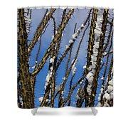 Snowy Ocotillo Sky Shower Curtain