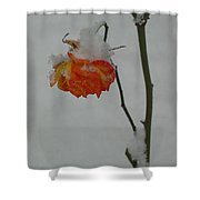 Snowy Orange Rose Shower Curtain