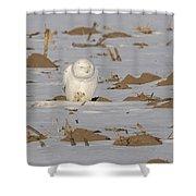 Snowy Owl 2016-9 Shower Curtain