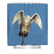 Snowy Owl 2018-17 Shower Curtain