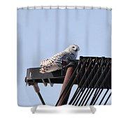 Snowy Owl 2959 Shower Curtain