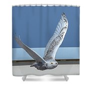 Snowy Owl 4 Shower Curtain