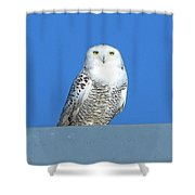 Snowy Owl 9 Shower Curtain
