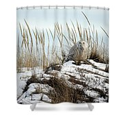 Snowy Owl In Dunes #2 Shower Curtain