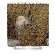 Snowy Owl In Grass Shower Curtain