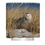 Snowy Owls On The Beach Shower Curtain