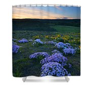 Snowy Phlox Sunset Shower Curtain