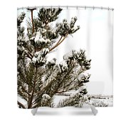 Snowy Pine Shower Curtain