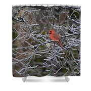 Snowy Red  Shower Curtain
