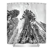 Snowy Sequoias At Calaveras Big Tree State Park Black And White 6 Shower Curtain