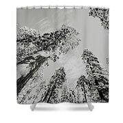 Snowy Sequoias At Calaveras Big Tree State Park Black And White 7 Shower Curtain