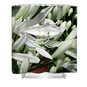 Snowy White Beauty. 7 Shower Curtain