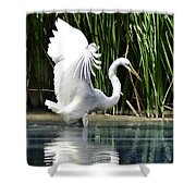 Snowy White Egret In The Wetlands Shower Curtain