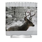 Snowy Young Buck Shower Curtain