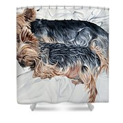 Snuggling Yorkies Shower Curtain