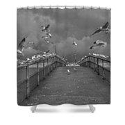So Many Gulls Shower Curtain