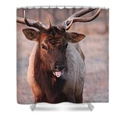 So There Shower Curtain
