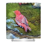 Soaking Summer Tanager Shower Curtain