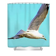 Soaring In A Blue Sky Shower Curtain