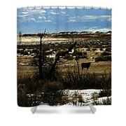 Soaring In Montana Shower Curtain