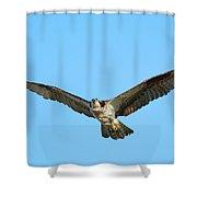 Soaring Osprey Shower Curtain