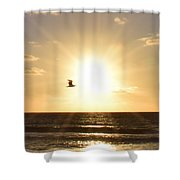 Soaring Seagull Sunset Over Imperial Beach Shower Curtain