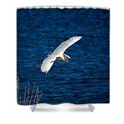 Soaring Snowy Egret  Shower Curtain