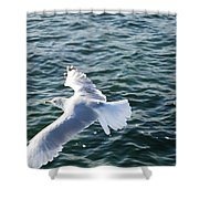 Soaring Waters Shower Curtain