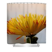 Soft And Complexed Shower Curtain