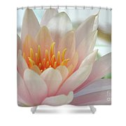 Soft And Delicate Water Lily Shower Curtain