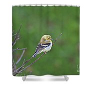 Soft And Fluffy Shower Curtain