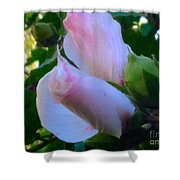 Soft And Gentle Rose Of Sharon Shower Curtain