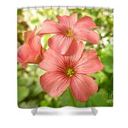 Soft And Peachy Smiles Shower Curtain