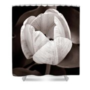 Soft And Sepia Tulip Shower Curtain