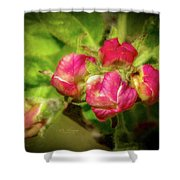 Soft And Soothing 2 Shower Curtain