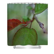 Soft Branch Shower Curtain