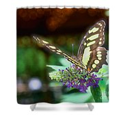 Soft Butterfly Shower Curtain