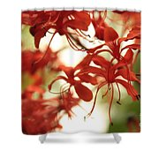 Soft Colors Natural Canvas Shower Curtain