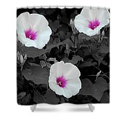 Soft Contrast Shower Curtain