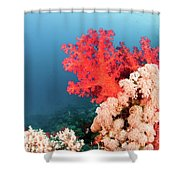Soft Coral  Shower Curtain