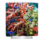 Soft Coral In Truk Shower Curtain