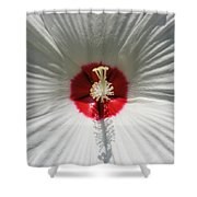 Soft Cotton Sheets Shower Curtain