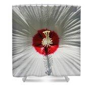 Soft Cotton Sheets Shower Curtain