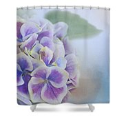 Soft Hydrangeas On Blue Shower Curtain