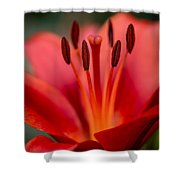 Soft Intimate View Shower Curtain