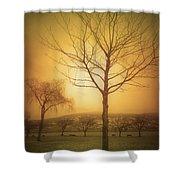 Soft Light In Summerland Shower Curtain