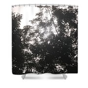 Soft Light Shower Curtain