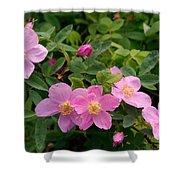 Soft Light On Nookta Rose Rosa Nutkana Shower Curtain