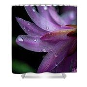 Soft Macro Of Purple Flower Shower Curtain