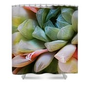 Soft Natural Succulents Shower Curtain